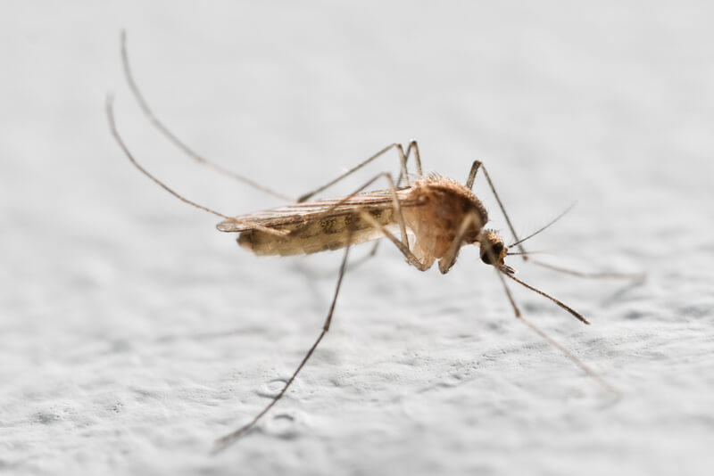 anti muggen
